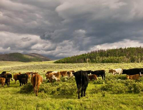 "Does ""Beef: It's What's For Dinner"" violate the First Amendment? In Montana, a judge says yes"