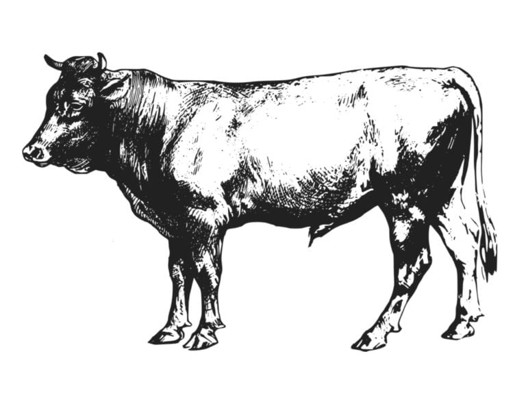 Online Calf Sale