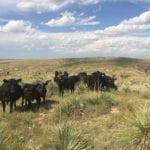 Schreiber Ranch 3