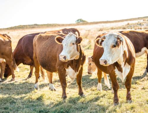 Part 4 and Final: Delving Into Ranch Group's First-Ever Cattle Producers' Long-Range Plan