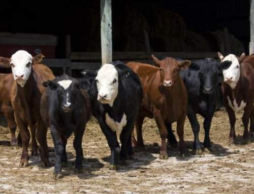 National Checkoff Petition Drive Nearing Deadline