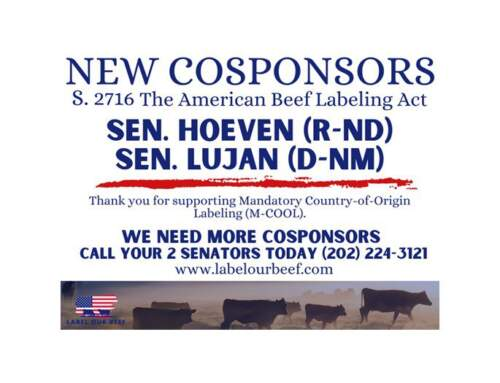 Cattle Group Applauds Sens. Hoeven and Luján for Cosponsoring  M-COOL Bill for Beef